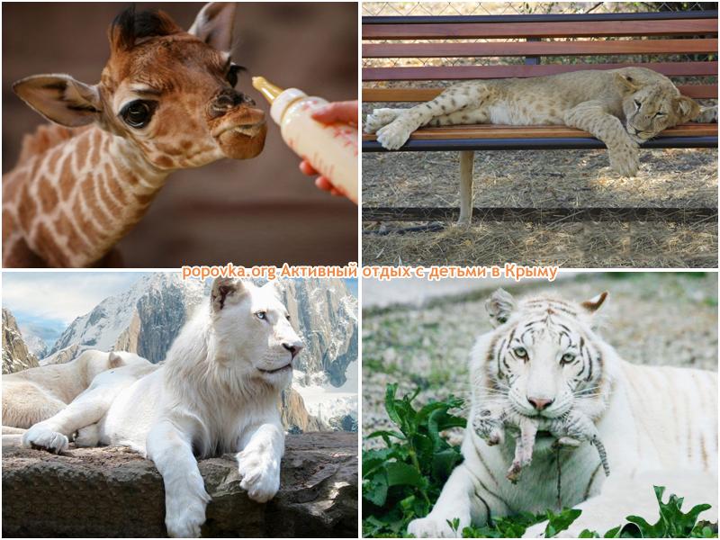 Животные в Белогорске. Парк Тайган
