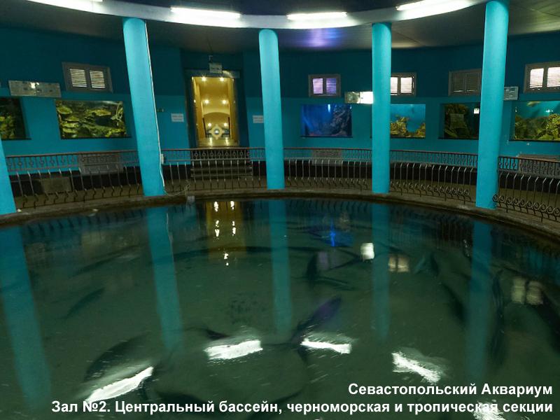 Фото аквариум севастополь